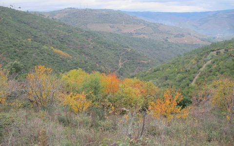 vila seca general view (2)
